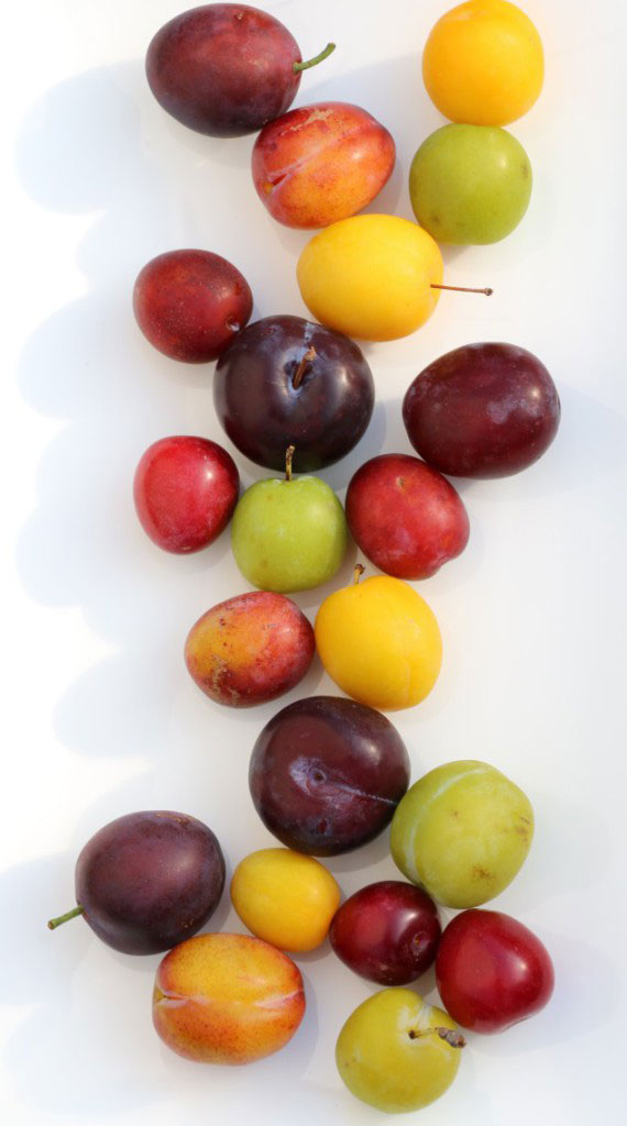 banner of plums
