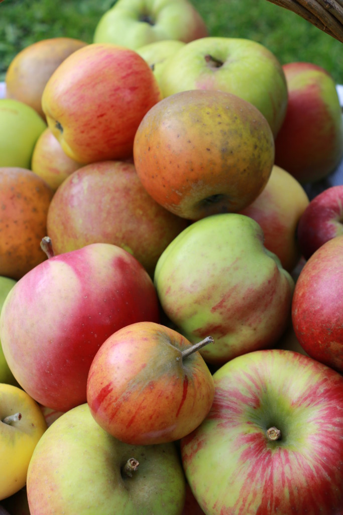 Local apple Varieties CN