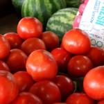 In Tomato Fields