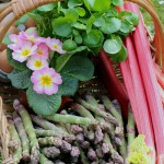 Cambridge in March: English asparagus and rhubarb