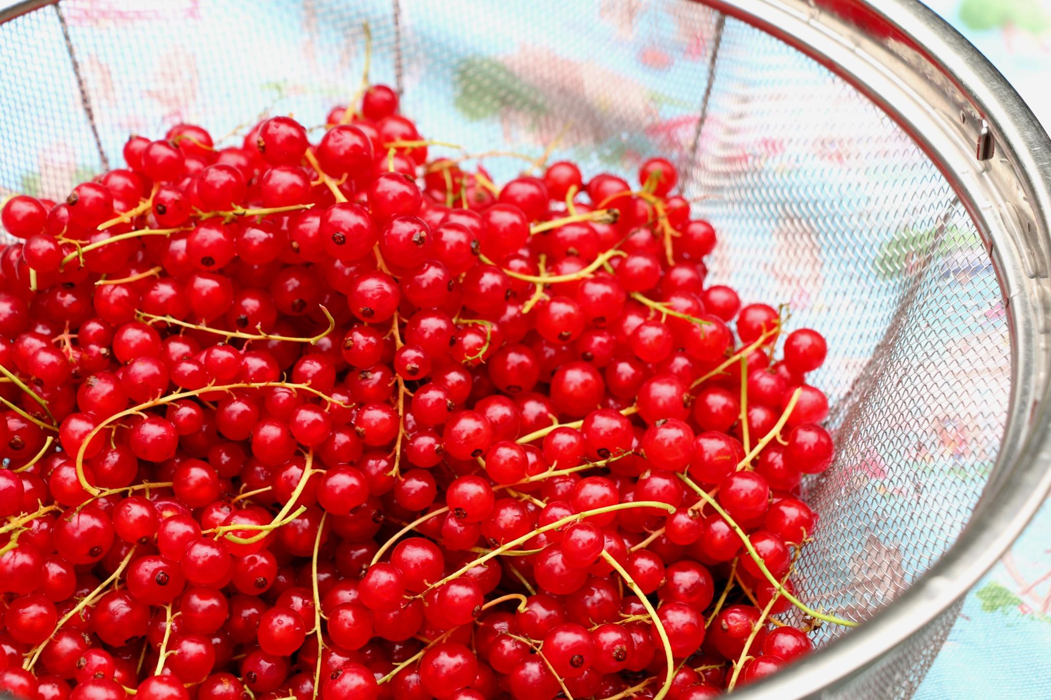 Rødgrød med fløde (Danish red fruit pudding) - Crumbs on the Table