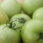 Fried green tomatoes in England