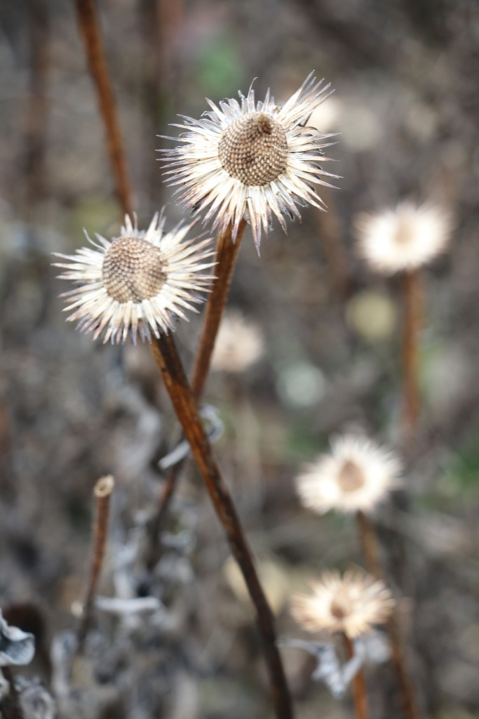 laura-donohue-seed-heads