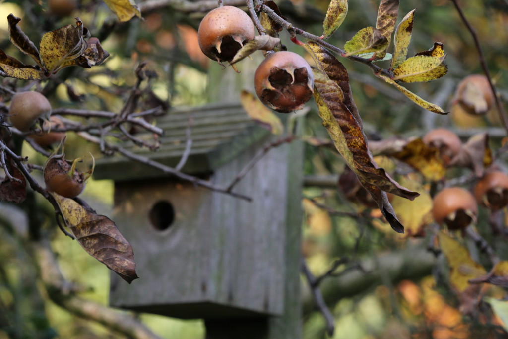 medlars-and-birdhouse