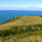 Slow food trip to Le Marche, Italy