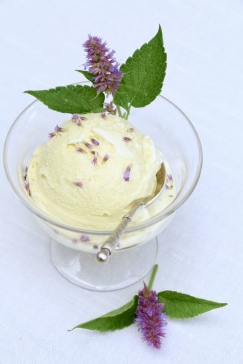 Anise hyssop gelato - Crumbs on the Table